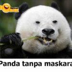 Panda Tanpa Maskara