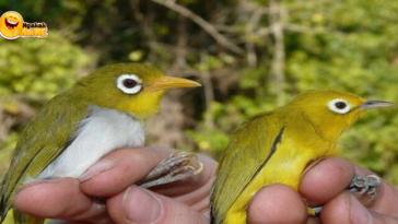 Penemuan 2 Burung