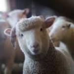 Kejadian Aneh - Mengapa Muslim ini Mengajak Agar Berkurban Hewan Dihentikan