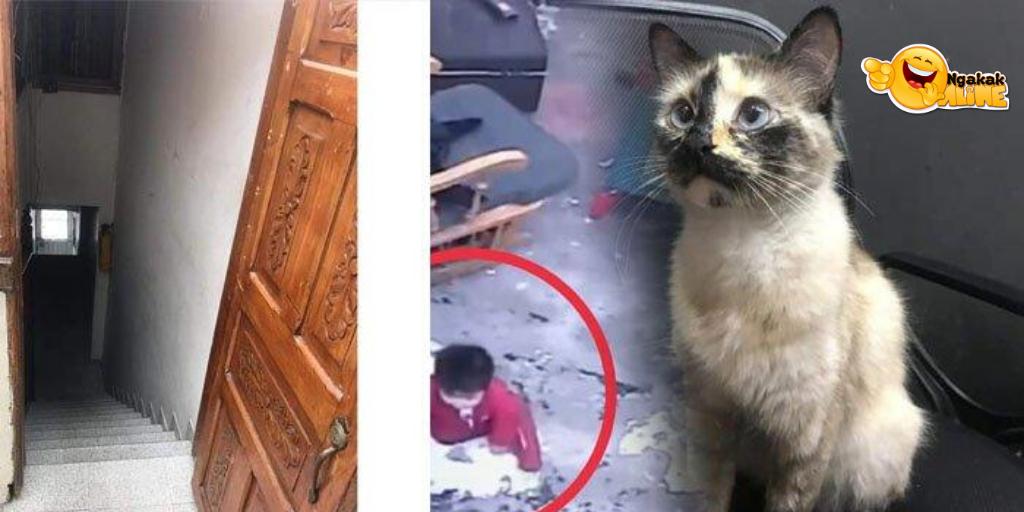Video Viral Detik-detik Kucing Selamatkan Nyawa Balita